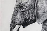 Tammy Mackay, 120 - UNTITLED (ELEPHANT)