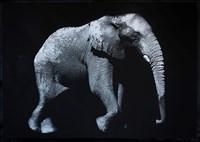 Max Garner Reidy, 48 - ELEPHANTIS