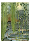 Freja Lijia Bao, 1100 - SPLENDOUR - A DREAM OF THE EASTERN CAPITAL-SUMMER BAMBOO