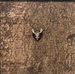 Howard Miller, 1067 - OWL HUNTING TROPHY-TYTO ALBA