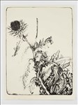 Jim Dine Hon RA, 912 - THE ARTICHOKES