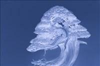 Christine Adams, 731 - SHIMPAKU BLUE GRACE