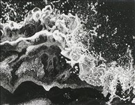 Marianne Ferm, 672 - SEA SHAPES ON THE SEASHORE
